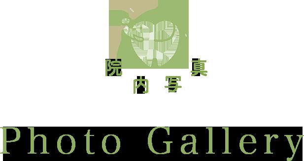 フォトギャラリー PHOTO GALLERY